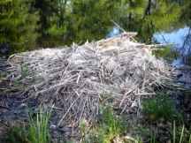 perfect nest (400x300)